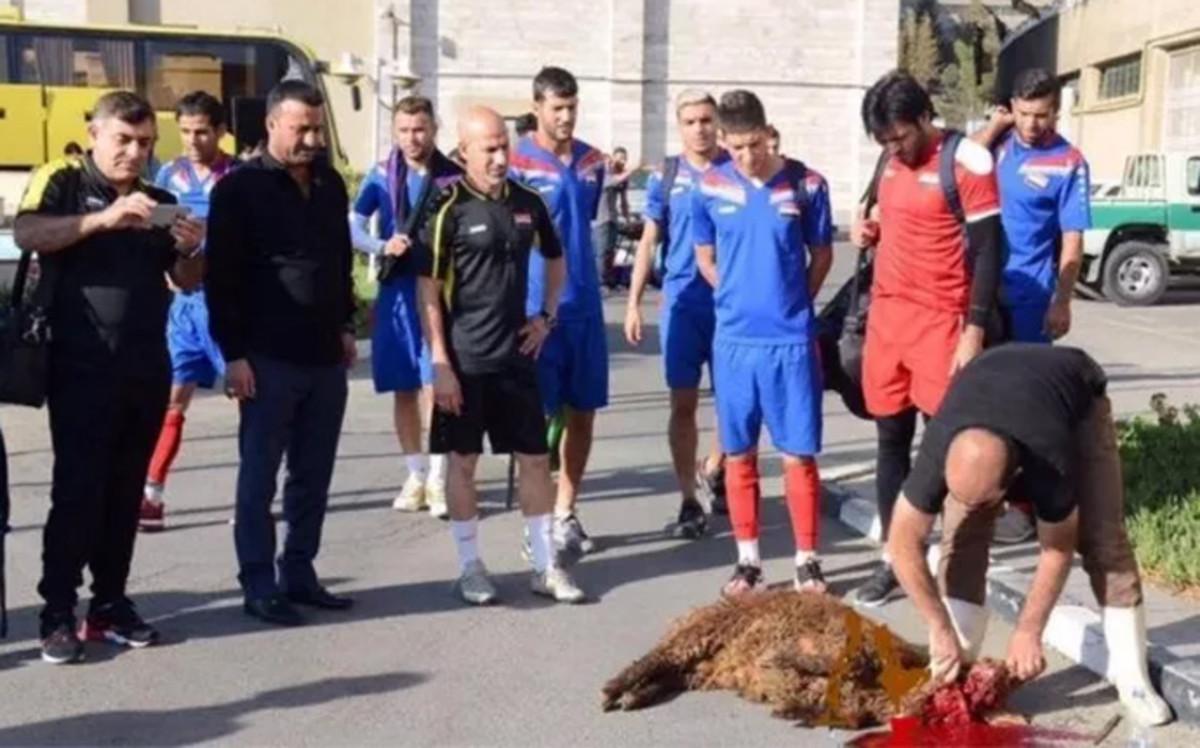La selecci n de irak sacrifica a una oveja para alejar la - Acabar con la mala suerte ...