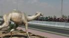 Dubai ofrece escenas ciclistas como esta, con temperaturas de 25� C.