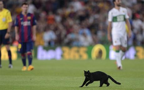 El FC Barcelona ha ganado una liga que empezó con la visita de un gato negro