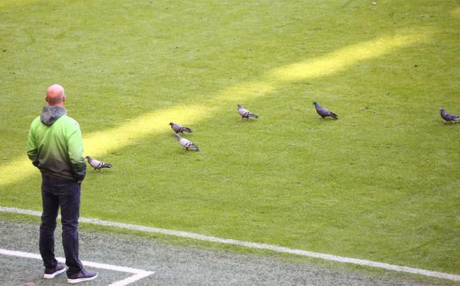 Las palomas que presenciaron el Bayern-Gladbach