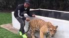 Hamilton asust� a un tigre