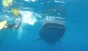Sergio Ramos se encontró con un tiburón