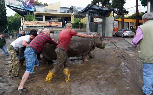 ¡Se escapan animales del zoo de Tiflis, donde jugará el Barça el 11 de agosto!