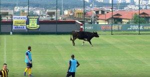 La vaca futbolera
