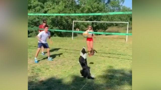 El perro que juega a volleyball como un profesional y que se ha hecho viral en las redes ¡de locos!