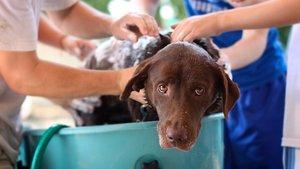 ¿Cada cuánto hay que bañar a un perro?