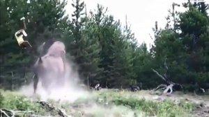 La terrible embestida de un bisonte a una niña en Yellowstone