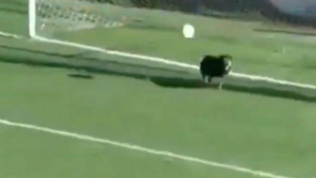 ¡Un perro evitó un gol en pleno partido!