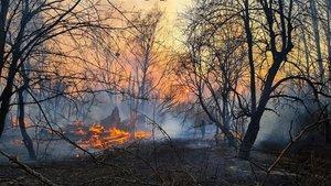 Incendios en el área de Chernobyl hacen aumentar la radiación