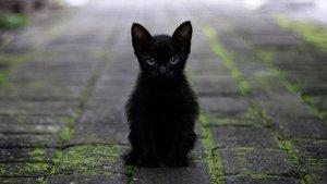 La pantera vista en Granada es al final un gato