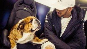 Hamilton y su perra Coco