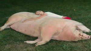 La novia del ganador del US Open tiene una cerda de 500 kilos