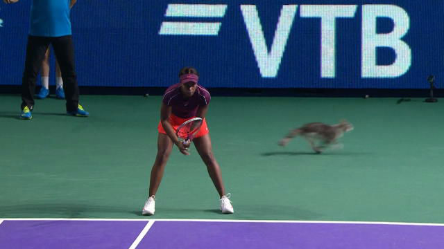 ¡Cuidado! Un gato aperece por medio de la pista en pleno partido