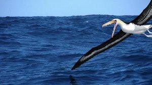 Encontrados en la Antártida los fósiles de las aves más grandes la historia