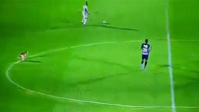 Un perro invade el campo y hace sus necesidades sin pudor: La anécdota que nos deja esta madrugada el fútbol colombiano
