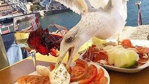 Una gaviota devora la comida de Iker Casillas | Marca