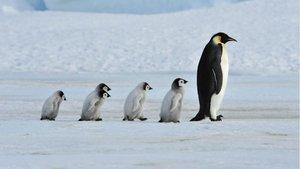 Unos pingüinos gays roban huevos de dos pingüinos lesbianas para ser papás