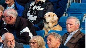 Yardley, el perro futbolero que acude a los partidos del Pollok FC escocés | Google