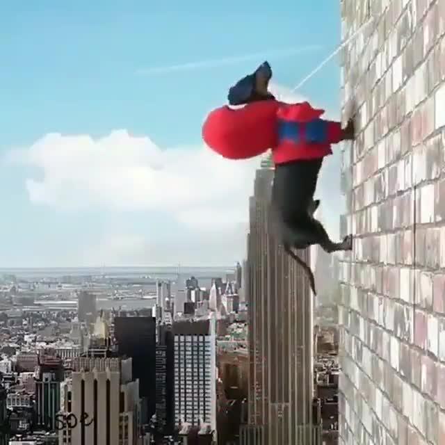 Lo más gracioso que verás hoy: El vídeo viral de Spider-Perro