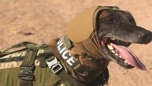 Los perros en el ejército estadounidense dispodrán de protecciones auditivas