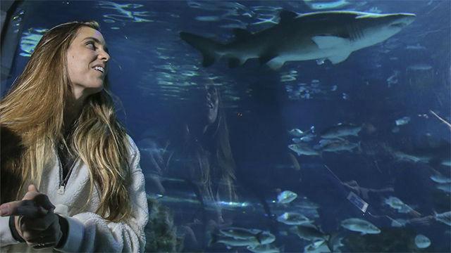 Ona Carbonell...¡Se baña con tiburones!