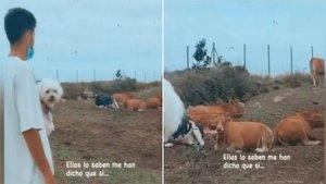 El hijo de Setién pregunta a las vacas si el Barça ganará la Champions