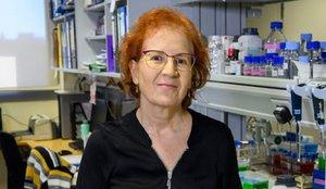 Una reconocida viróloga señala a los claros culpables de los rebrotes de coronavirus