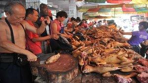 Comer carne de perro estará prohibido en China