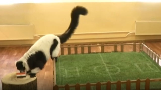 El lemur profeta del Mundial