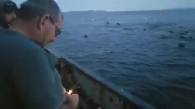 El video en el que un pescador aparece lanzándole explosivos a un grupo de leones marinos