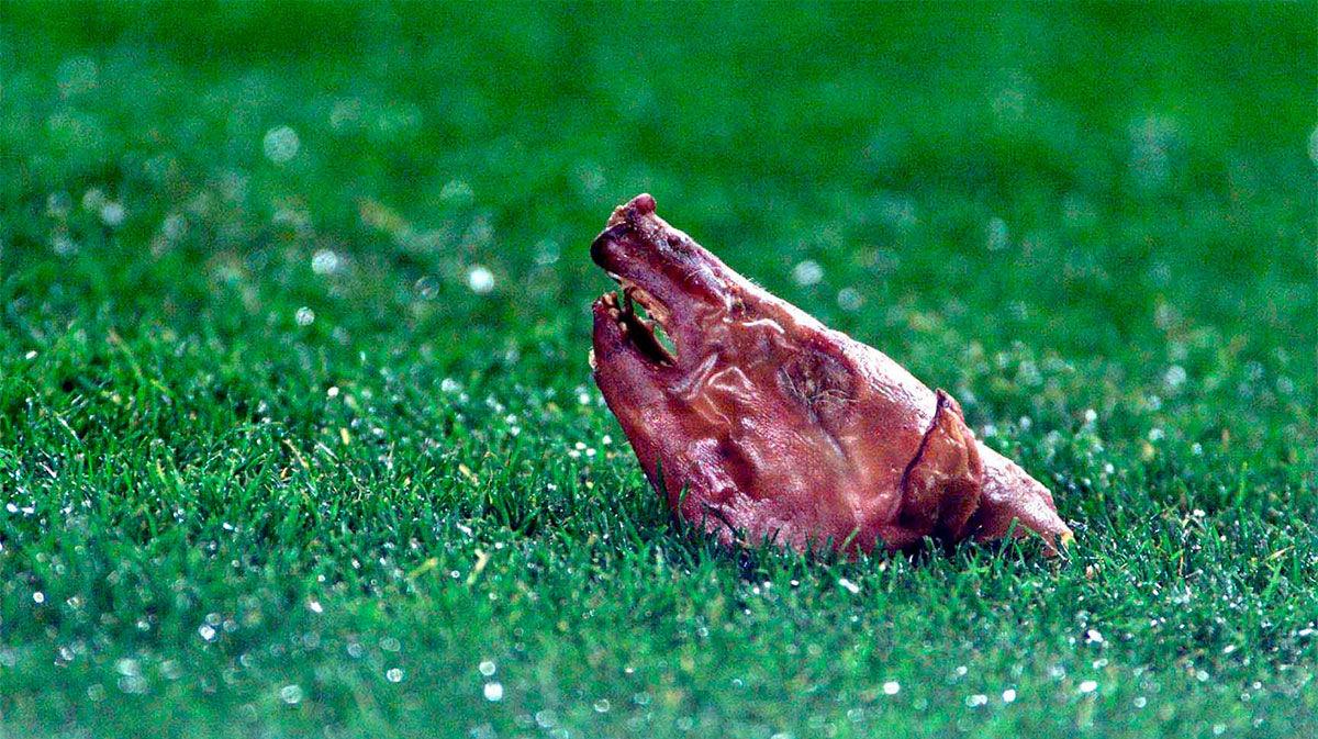 Figo: El cochinillo lo tengo preparado para hacerlo este viernes. El portugués recuerda la famosa escena en el Camp Nou