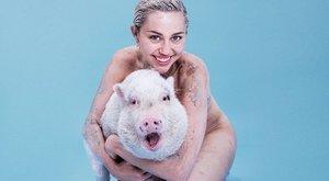 Miley Cyrus asegura haber sido perseguida por un extraterrestre
