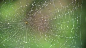 Una tela de araña